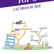 Top 5 Cat Trees of 2021 Header