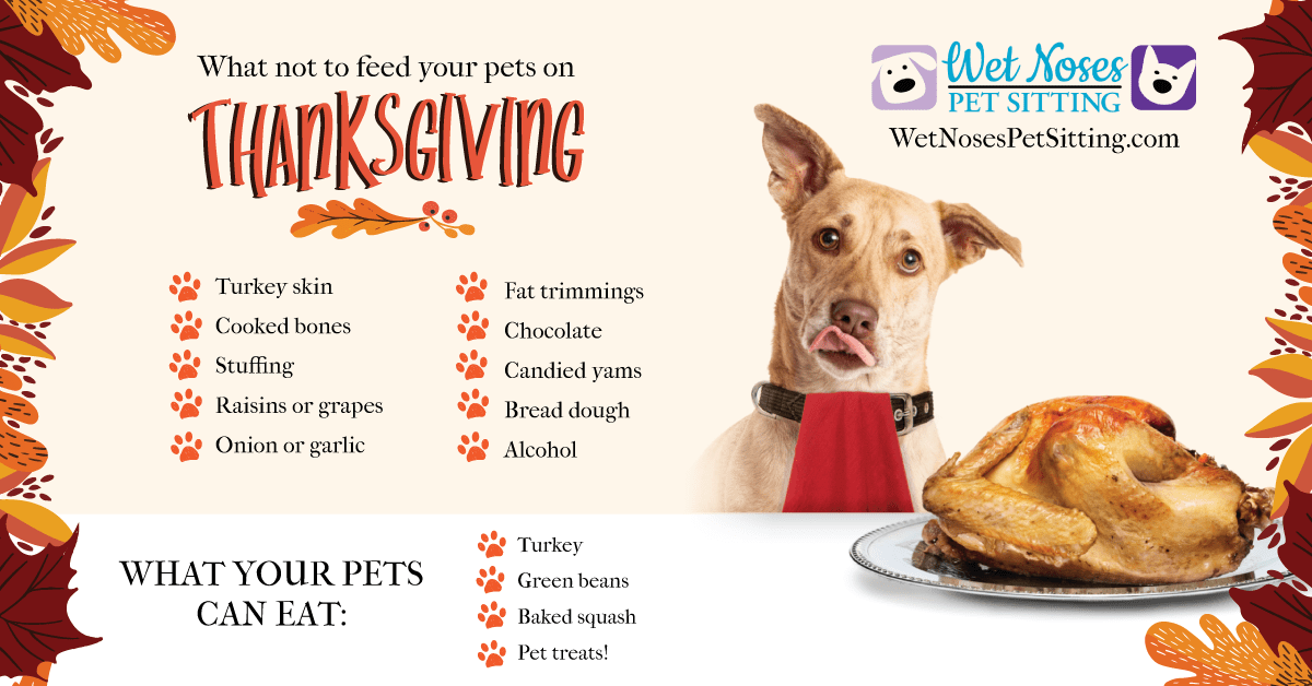 Foods to Avoid Feeding Your Pet This Thanksgiving Infographic